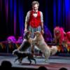 Johnny Peers & The Muttville Comix…comedy dog show
